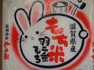 【1年産】滋賀県産 羽二重もち米1.5kg最高品質