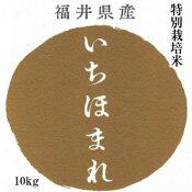 新米10kg送料無料特別栽培米福井県産いちほまれ5kg×2(指定通常袋)
