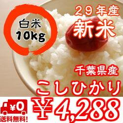 【29年産】新米入荷!千葉県産菜の花こしひかりつきたて白米10kg(5kg×2)※送料無料※※送料無料地域に除外があります※北海道・九州:+400円