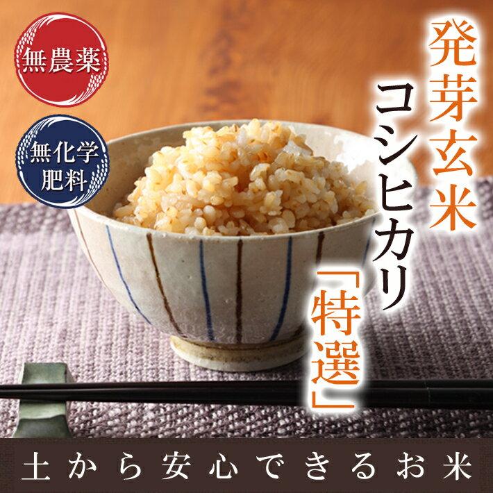 無農薬の発芽玄米送料無料無農薬・無化学肥料栽培無農薬コシヒカリ「特選」アブシジン酸は検出されませんでした!限定米 2kg真空パック30年産米・食味鑑定士認定米