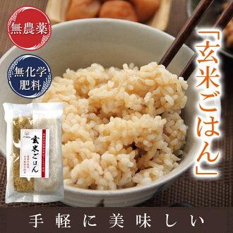 糙米飯包蒸煮袋無農藥、無化肥栽培越光使用200g入*10袋福井縣產特別栽培美國29年米飯、滋味評價人認定米