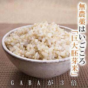 無農薬のお米送料無料無農薬・無化学肥料栽培はいごころ GABA3倍限定米 3kg令和元年福井県産米・食味鑑定士認定米 玄米食の方へおすすめ