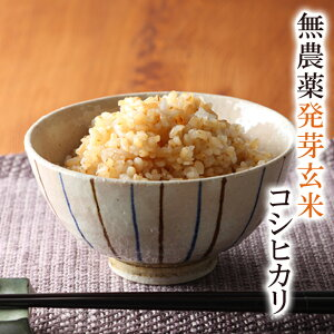 発芽玄米 令和2年福井県産送料無料 無農薬・無化学肥料栽培無農薬コシヒカリ「特選」食物繊維・ビタミンB群・GABAが豊富アブシジン酸は検出されませんでした!限定米 2kgフレッシュ真空