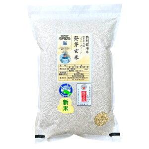 発芽玄米減農薬ミルキークイーン数量限定 2kg令和元年福井県産米・食味鑑定士認定米※もちもちして食べやすい
