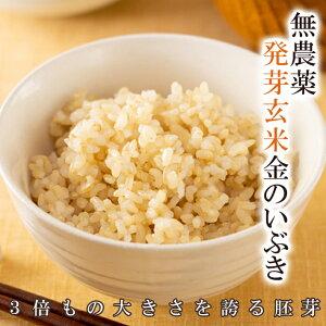 発芽玄米の無農薬送料無料無農薬・無化学肥料栽培金のいぶきアブシジン酸は検出されませんでした!限定米 5kg真空パック令和1年宮城県産米・食味鑑定士認定米