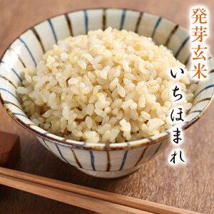 発芽玄米 いちほまれ送料無料無農薬・無化学肥料栽培無農薬いちほまれ令和2年福井県産食物繊維・ビタミンB群・GABAが豊富アブシジン酸は検出されませんでした!限定米 5kg フレッシュ真空