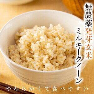 【新米入荷】発芽玄米 送料無料無農薬・無化学肥料栽培無農薬ミルキークイーン令和3年福井県産食物繊維・ビタミンB群・GABAが豊富アブシジン酸は検出されませんでした!限定米 2kgやわら