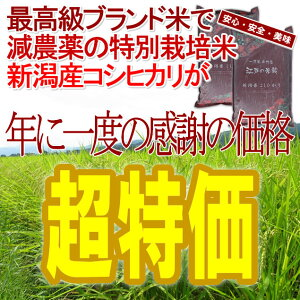 [新米予約]新潟県産コシヒカリ5kg×2個