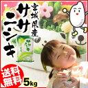 宮城県産 ササニシキ 5kg[送料無料 28年産 白米 ささにしき 白米 お米 ご飯]【TD】【TRS】 【メーカー直送品】