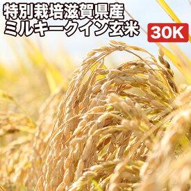 特別栽培滋賀県産ミルキークイン玄米30Kお米【選べる搗き方 白米・ハイガ米・玄米・8分つきなど】完全真空包装米(真空包装代 無料)長期保存・鮮度維持・カビ、害虫などの繁殖 防止に♪美味しいご飯。贈り物にも。
