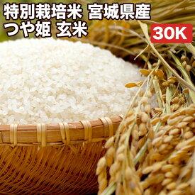 特別栽培米宮城県産つや姫玄米30Kお米【選べる搗き方 白米・ハイガ米・玄米・8分つきなど】完全真空包装米(真空包装代 無料)長期保存・鮮度維持・カビ、害虫などの繁殖 防止に♪美味しいご飯。贈り物にも。