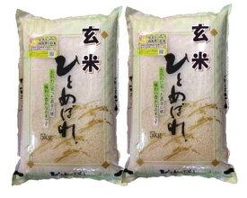 令和元年産福島県会津産ひとめぼれ玄米10kg[石抜き処理済]【あす楽対応】