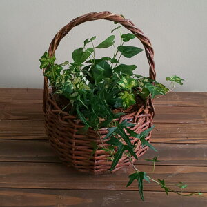 【花のまちころぼっくる】【選べるアイビーのおしゃれな取っ手付きバスケット(ホワイト系)(グリーン系)】 観葉植物・鉢植え・贈り物・模様替えお祝い・プレゼント・ギフト