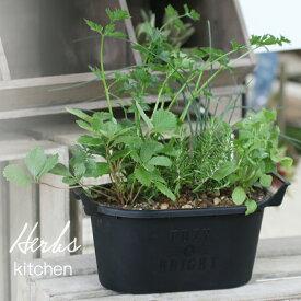 【花のまちころぼっくる】ハーブ寄せ植え【キッチン】おうち時間を楽しもう スパイスハーブ 香りづけ ひと手間 料理 飲用 園芸 装飾 寄せ植え