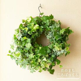 【花のまちころぼっくる】アイビーのハンギングリース吊るす 立て掛ける 直置き寄せ植えリース ギャザリングおうち時間を楽しもう