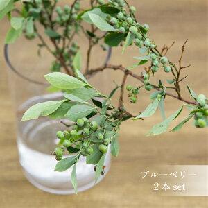 【花のまちころぼっくる】枝物・生花ブルーベリーの枝実付き2本セット70〜80cm