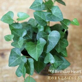 【花のまちころぼっくる】【アイビー ヘデラ】バースデーハート(3寸ポット苗)ガーデニング・庭づくり・風水効果・グリーンリース観葉植物・インテリア・アレンジ・育てやすい