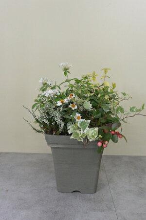 秋の寄植えNo.4