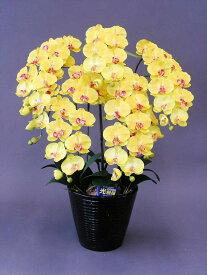 【本物のような造花】☆胡蝶蘭加工光触媒L5本立ち☆抗菌作用・消臭効果がある光触媒の造花でお部屋の空気を爽やかに♪