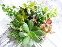 多肉植物10種おまかせセット!