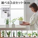 観葉植物 おしゃれ インテリア 鉢 おしゃれ パキラ ミニ モンステラ セット 小さい 棚 卓上 ハイドロカルチャー サン…