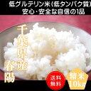 30年産 千葉県産 春陽 (低グルテリン米) 白米 10kg(5kg×2)