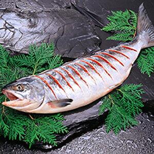 【小樽海洋水産】新巻鮭(3kg 切れ目)(鮭・サケ・さけ・シャケ・しゃけ)【贈り物】