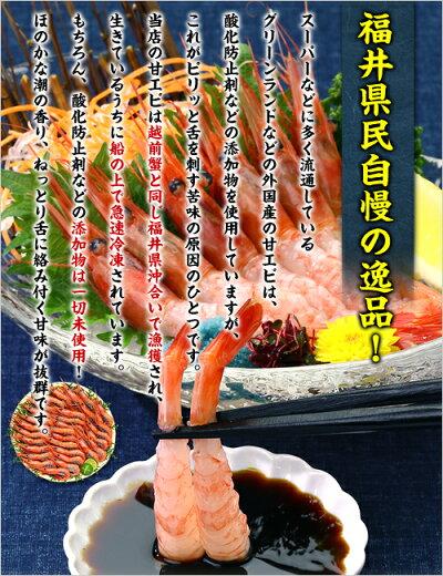 日本海船上急速凍結の一級品!子持ち越前甘えび大サイズ500g(30尾前後)送料無料!【エビ】【えび】【あまえび】【アマエビ】【甘エビ】
