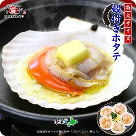 海鮮BBQにもってこい♪天然殻付き生ほたて特大サイズ(殻幅12〜13cm)×10 枚入り【帆立】【ほたて】【ホタテ】【バーベキュー】【BBQ】