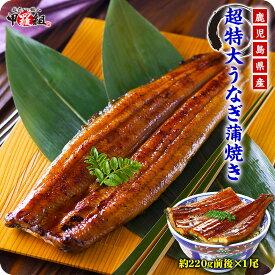 鹿児島県産の超特大うなぎ蒲焼き約220g前後×1尾真空パック※格安販売のため、お一人様2尾まで。