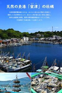 【生食OK】瀬戸内海のプレミアム殻付きカキ12個入り 牡蠣 かき