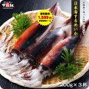 送料無料1,599円!更に2個で300円OFFクーポンあり!日本海の船上凍結一級品!刺身用するめいか3杯入り/約600g前後(約…