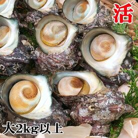 海鮮 ギフト 長崎県産 サザエ(大) 2kg 刺身・BBQ など