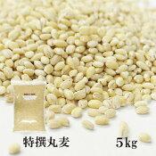 特選丸麦5kg〔チャック付〕※もち麦とうるち麦混合