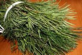 高野槇(コウヤマキ)切り枝 30本セット お供えの花 お盆 お彼岸 仏事 葉物