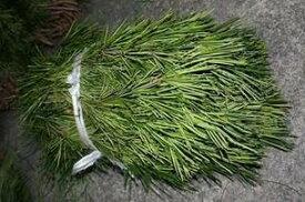 高野槇(コウヤマキ)切り枝(大) 30本セット お供えの花 お盆 お彼岸 仏事 葉物