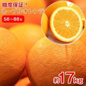 【2021/順次配送中】 送料無料 オレンジ アメリカ産 ネーブルオレンジ オレンジ ネーブル 約 17kg 55玉 〜 88玉 みかん ご家庭用 みかん ご自宅用 加工用 果物 くだもの フルーツ 母の日 ギフト