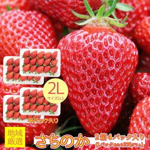 【2020/順次配送中】送料無料 地域厳選 いちご イチゴ さちのか 幸の果 苺 秀品 特大 大粒 2L 以上 2箱 4パック入り 270g 4パック 秀品 ご家庭用 いちご ケーキ チョコ ギフト お歳暮 誕生日 ギフ