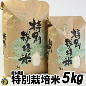 特別栽培米 5kg【送料無料】熊本産 美味しい お米