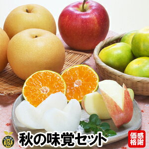 39秋の味覚セット【送料無料】感謝価格 梨 さつまいも みかん りんご