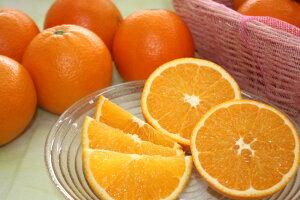 【2月中旬から】【送料無料】ネーブルオレンジ5kg【熊本県産】
