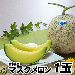 【送料無料】熊本県産 マスクメロン1玉