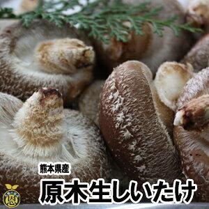 【送料無料】熊本県産 生しいたけ(原木栽培)1kg