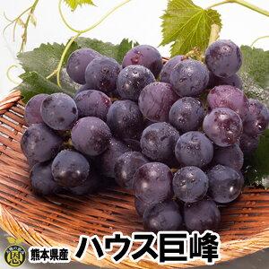 ハウス巨峰1kg【送料無料】贈答品 ギフト 高級ぶどう 温室栽培