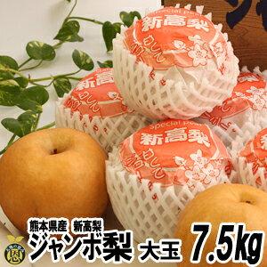 ジャンボ梨(新高)7.5kg 大玉7-9玉【送料無料】熊本県 大きい 梨 贈答用 ギフト