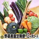 【送料無料】野菜産直定期便(12ヶ月コース)