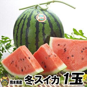 【送料無料】熊本産 秋スイカ L−1玉入
