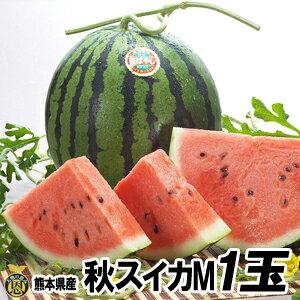 秋スイカ M−1玉入【送料無料】熊本産 西瓜