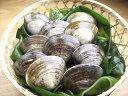 【はまぐり】三重 桑名 蓄養 活 蛤 (ハマグリ) 大サイズ 300g (8から12個)選りすぐりの 活はまぐり をお届…