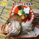 【お食い初め 鯛】【送料無料】祝い鯛 お食い初め お祝い用 【祝鯛】国産真鯛 焼き鯛  炭火焼 1.2kgupの愛媛県…